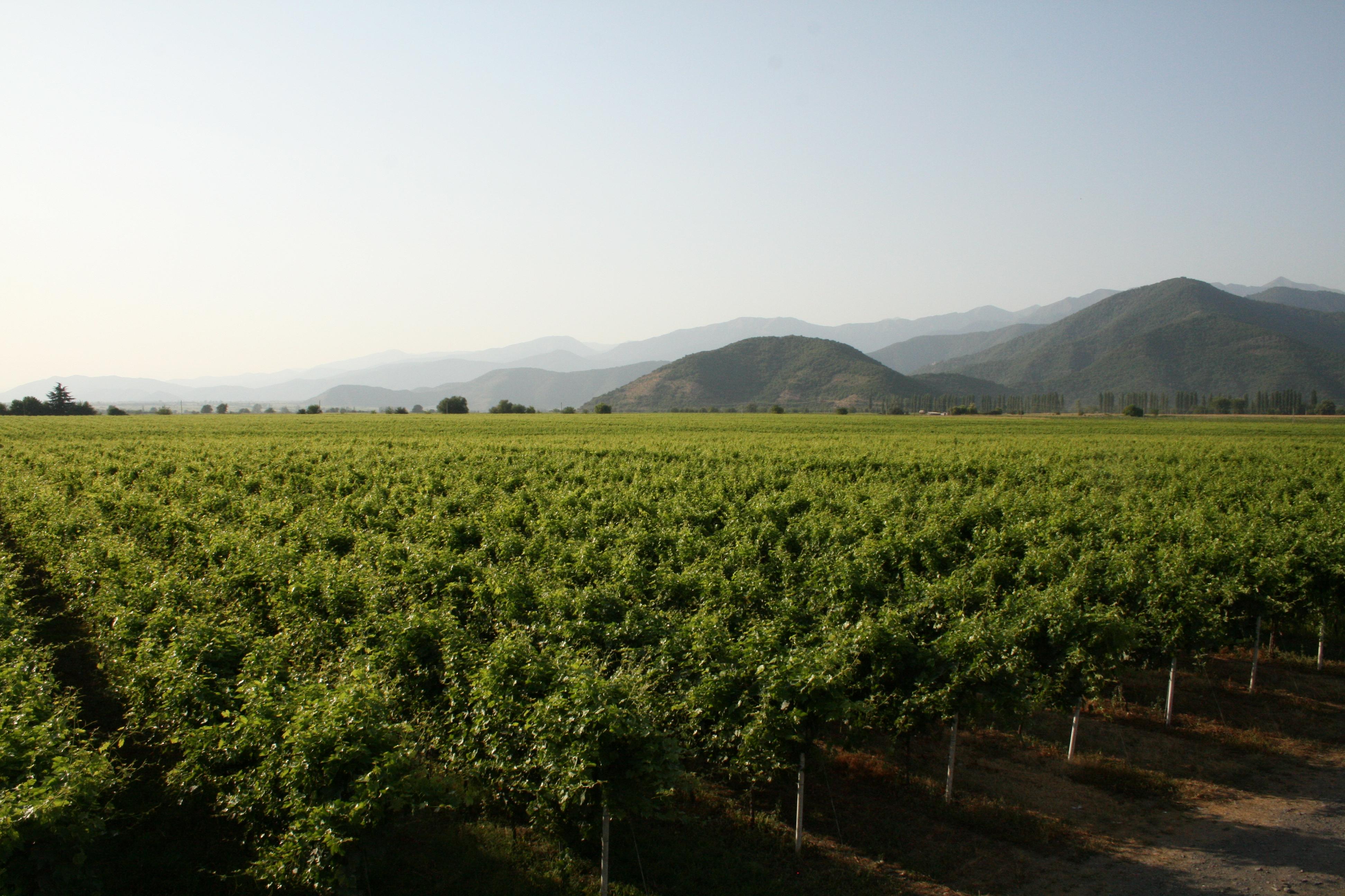 georgische wijn gaard